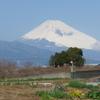 P1140073 3月12日 今日の富士山