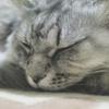 R0351868 春の眠り