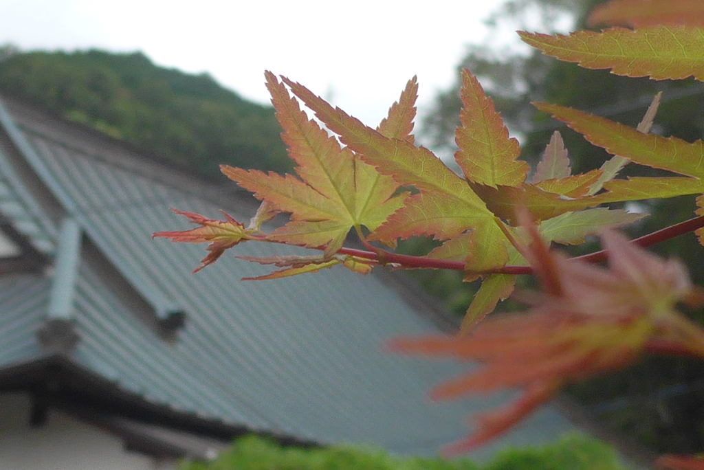 P1280208 伊豆 高源寺にて