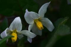 P1140042 野の花