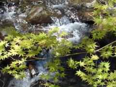 P1140645 若葉と渓流