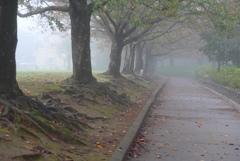 P1180765 霧の朝に