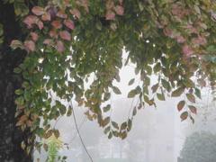 P1180771 霧の朝に