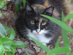 P1160635 公園のネコちゃん