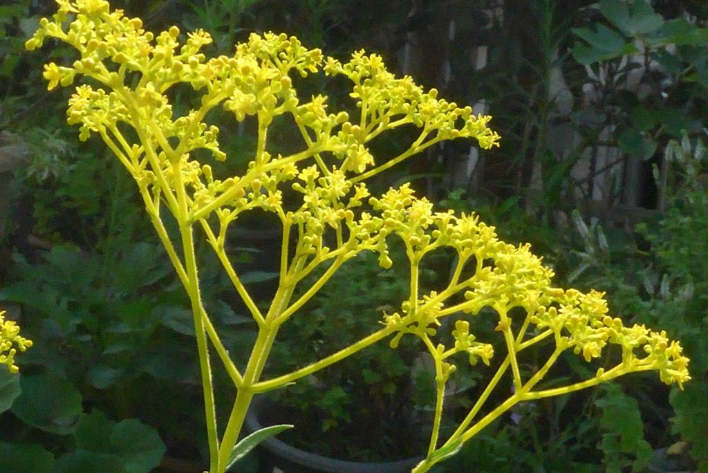 P1240224 秋の花