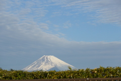 P1130285 お茶と富士山