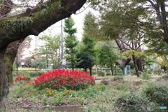 黒鐘公園とサルビア7