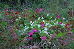 黒鐘公園の雑草の中の花