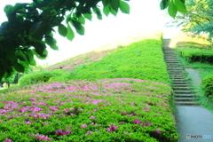 小金井公園 つつじの丘