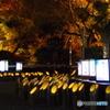 竹灯篭と紅葉