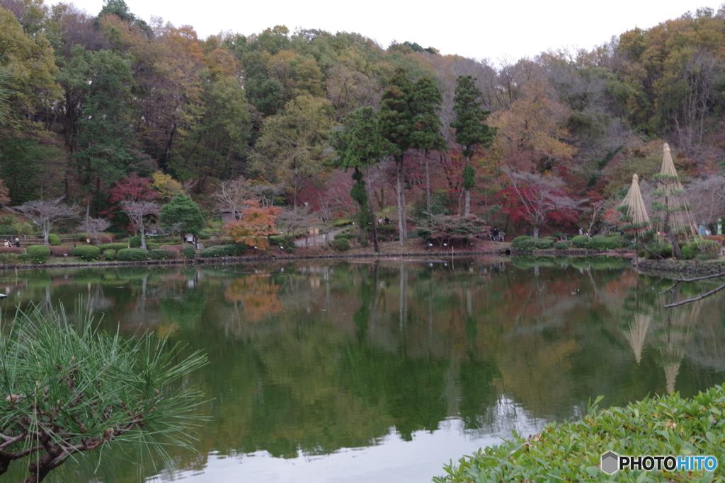 紅葉の薬師池2