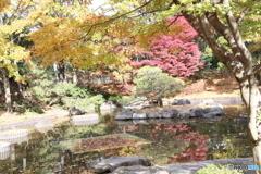府中の森公園 池4