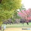 小金井公園 秋6