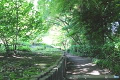 新緑の通り道