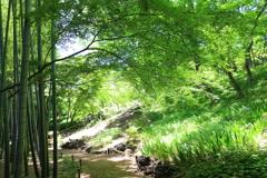 新緑の竹ともみじ