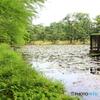 神代植物公園 睡蓮池