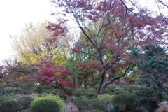 六義園の紅葉 (3)