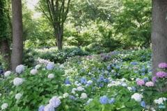 郷土森の紫陽花の群れ