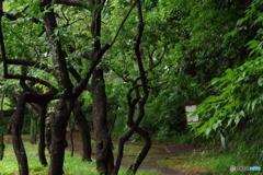 雨あがりの新緑の梅園.5