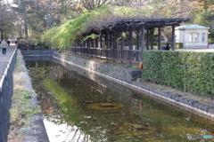 江戸東京たてもの園の堀2