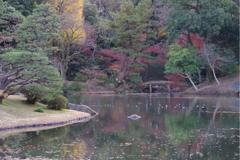 六義園 池2