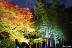 六義園ライトアップ 竹とモミジ