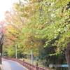 紅葉車がやって来るー玉川上水緑道7
