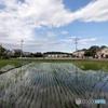 水田と雲5