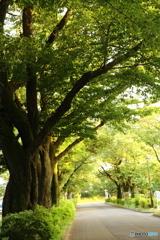 小金井公園交番通り
