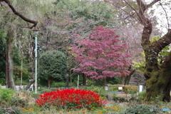 黒鐘公園とサルビア