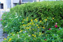武蔵国分寺公園の花壇10