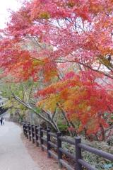 高尾山の紅葉もみじ2