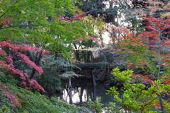 六義園の紅葉 (4)