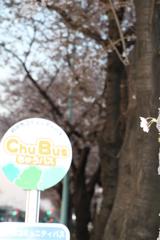ちゅうバスと桜