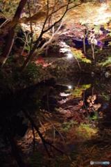 六義園ライトアップ池2