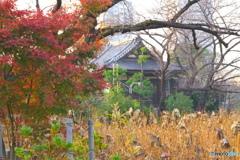 紅葉と不忍池の大黒天堂