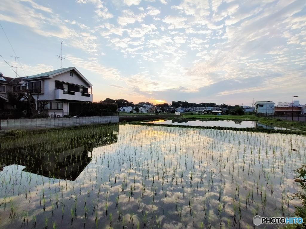 田んぼの朝日と雲