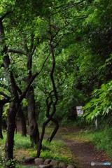 雨あがりの新緑の梅園.H5