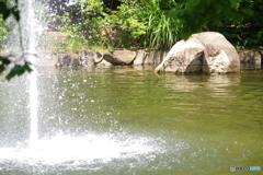 瞬美な噴水19と新緑と池