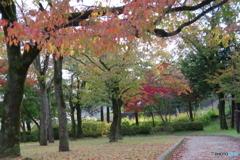 綾南公園 紅葉