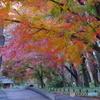 神代植物公園 ばら園テラスの紅葉