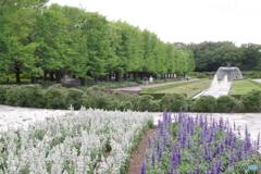 新緑のカナールと花壇2
