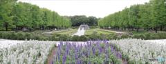 パノラマ 新緑のカナールと花壇