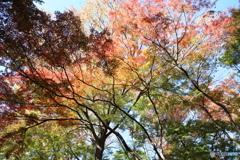 紅葉の裏側