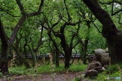 雨あがりの新緑の梅園.4