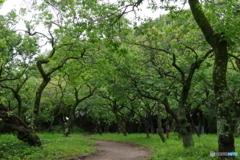 雨あがりの新緑の梅園.1