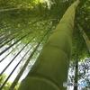 天までとどく竹