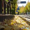 車道のイチョウの葉たち