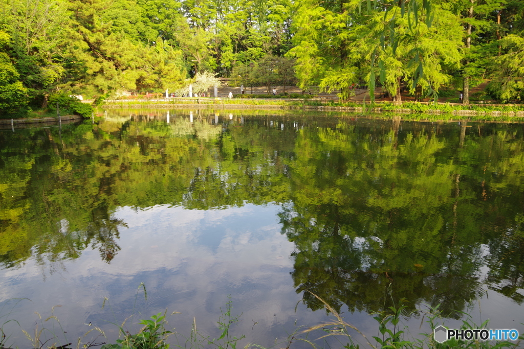 新緑の池13