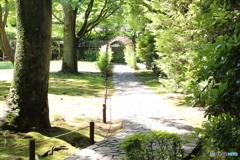 新緑と萩のトンネル